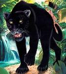 """Оригинал схемы вышивки  """"черная пантера """" ."""