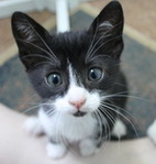Профиль кошка_Блошка