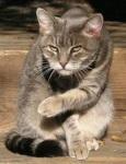 ������� Oldcat