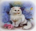 Профиль Кареглазая_кошка