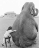 ������� Elephant_Talk