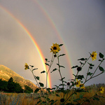 Профиль Naddi_Rainbow