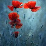 ������� Flor_de_Fuego