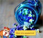 ������� Aliona_26