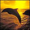Профиль Dolphin75