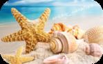������� sunny_vacation