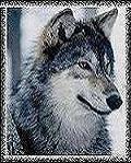 Профиль Арийский_ночной_волк