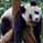 Профиль панда_я11