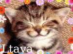 ������� Ltava