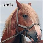 Профиль drolka