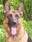 породы собак с фотографиями описание.