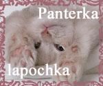 Профиль Panterka-lapochka