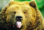 Очень красивые фото медведей.