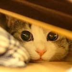 Профиль Milashka_Kitty-Chan