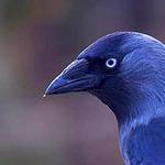 Профиль Raven_Loo