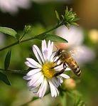 Профиль Autumn_honeybee