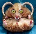 Профиль Der_Hamster
