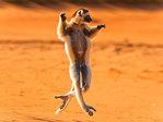 Профиль lemur70