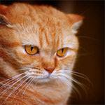 Профиль cats-witch