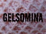 Профиль Gelsomina