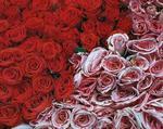 Профиль Цветочек_Роза