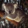 Профиль Koala_63