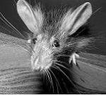 Профиль Крысота