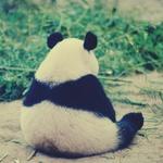 ������� PandaDi