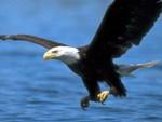 ������� eagle3