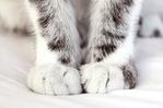 Профиль Кошка_Милка