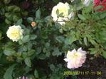 Профиль blossom60
