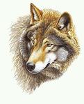������� Sternbild_Wolf