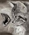Профиль Flying-cat