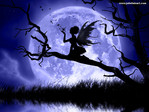 ������� Fairy_land