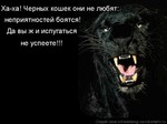 Профиль Черная_Кошка2