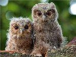 Профиль Wise_Owl