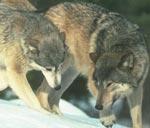 Профиль Logovo_Wolfy