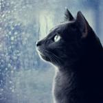 ������� Tanita_Cat