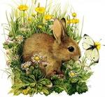 ������� rabbit17