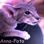 anna-foto