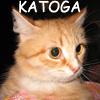 Профиль katoga