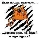 Профиль Tigra_Polosataya