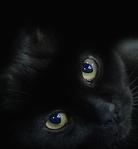 Профиль Независимая_cat