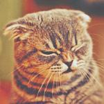 ������� cat_kitty_cat